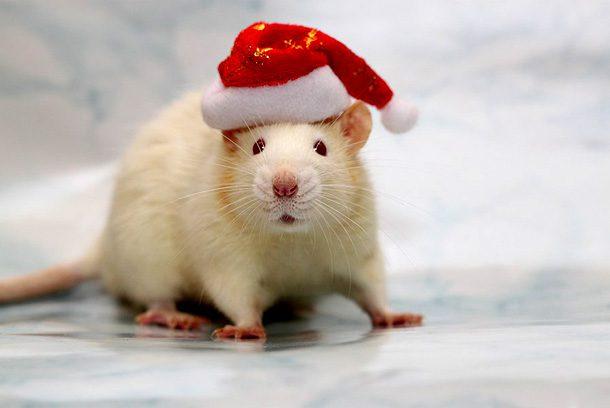Приметы на Новый Год 2020 Крысы что должно быть