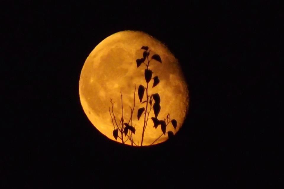 Убывающая луна в январе 2020 года: с какого числа по какое число?