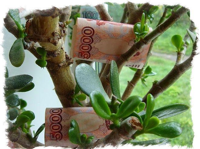 Что положить под денежное дерево чтобы водились деньги