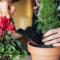 Лунный календарь пересадки комнатных растений на май 2021 года