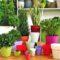 Лунный календарь пересадки комнатных растений на июнь 2021 года